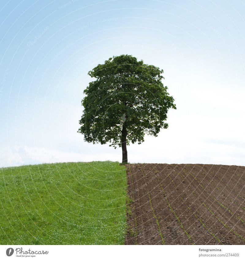 halbwegs Natur Landschaft Pflanze Himmel Wolkenloser Himmel Frühling Baum Feld Hügel Kraft Einsamkeit Hälfte Farbfoto Außenaufnahme Textfreiraum oben Tag