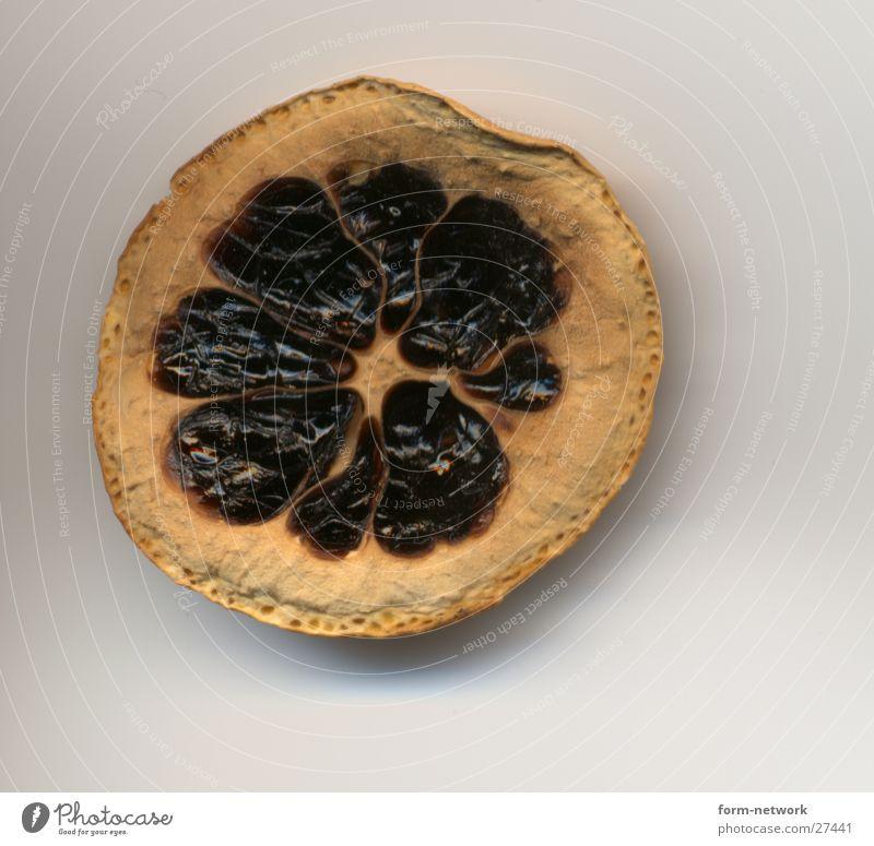 rottened lemon Frucht verfaulen trocken vertrocknet Zitrone getrocknet verdorben ungenießbar Zitronenscheibe Vor hellem Hintergrund