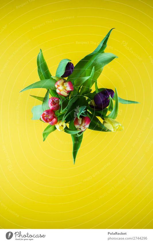#S# Tulpen Pflanze grün Blume gelb Frühling natürlich wild Blumenstrauß schenken verblüht Farbenwelt Frühlingsblume Frühlingstag Tulpenblüte Tulpenknospe