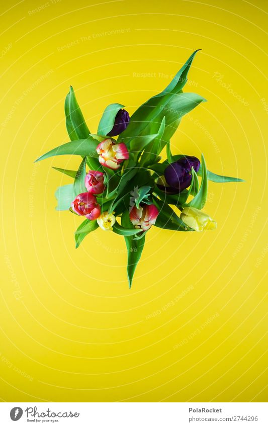 #S# Tulpen Pflanze verblüht Blume Blumenstrauß Frühling gelb wild natürlich mehrfarbig Tulpenblüte Tulpenknospe grün schenken Frühlingstag Frühlingsblume