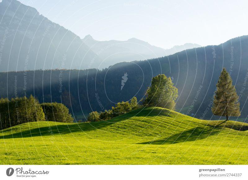 Bregenzer Wald - Schattenspiele Ferien & Urlaub & Reisen Natur Sommer grün Landschaft Baum Erholung Berge u. Gebirge Herbst Umwelt Frühling Wiese Gras wandern
