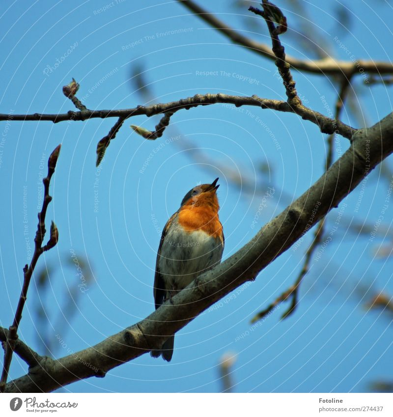 kleiner Sänger Natur blau Baum Pflanze Tier Wald Umwelt hell Vogel Wildtier natürlich Schnabel Wildpflanze Gezwitscher