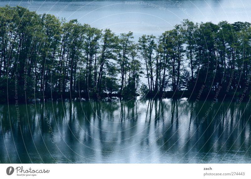 Trenn-Coast Umwelt Natur Landschaft Wasser Pflanze Baum Seeufer Teich Haussee dunkel blau grün Linie Baumreihe Wald Farbfoto Außenaufnahme Menschenleer