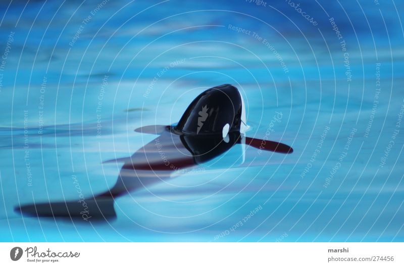 einsamer Orca Natur blau Wasser Meer Einsamkeit Tier Umwelt Fisch Spielzeug Im Wasser treiben Aquarium Wal Tierschutz Orca Artenschutz