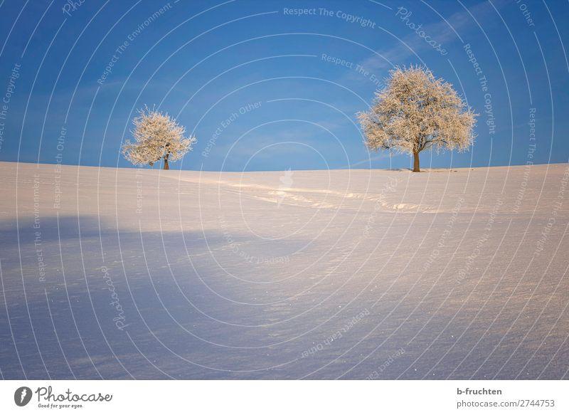 Winterlandschaft harmonisch ruhig Ferien & Urlaub & Reisen Schnee Natur Himmel Schönes Wetter Eis Frost Baum Hügel Berge u. Gebirge Blick wandern Freundlichkeit