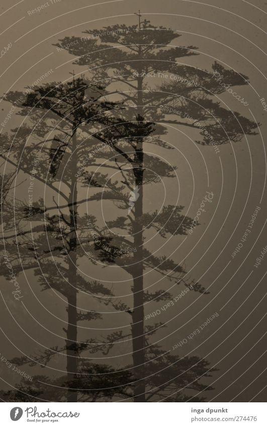 Zwei Riesen Natur Baum Pflanze Wald Umwelt Landschaft Berge u. Gebirge Luft Klima Nebel Urelemente fantastisch China Urwald exotisch schlechtes Wetter