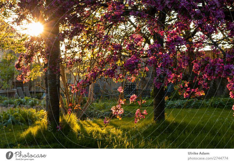 Garten Impressionen Wellness harmonisch Wohlgefühl Zufriedenheit Erholung ruhig Meditation Kur Spa Dekoration & Verzierung Tapete Landschaft Pflanze Frühling