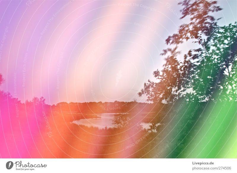 Farben am Sumpfsee Kunst Künstler Maler Umwelt Natur Landschaft Pflanze Wasser Wolkenloser Himmel Sommer Klima Wetter Schönes Wetter Baum Gras Sträucher Blatt