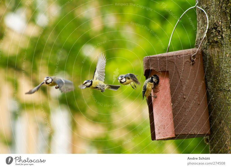 Flugschau Natur Baum Tier Frühling Glück Garten Vogel fliegen niedlich Schönes Wetter Baumstamm Nest Meisen