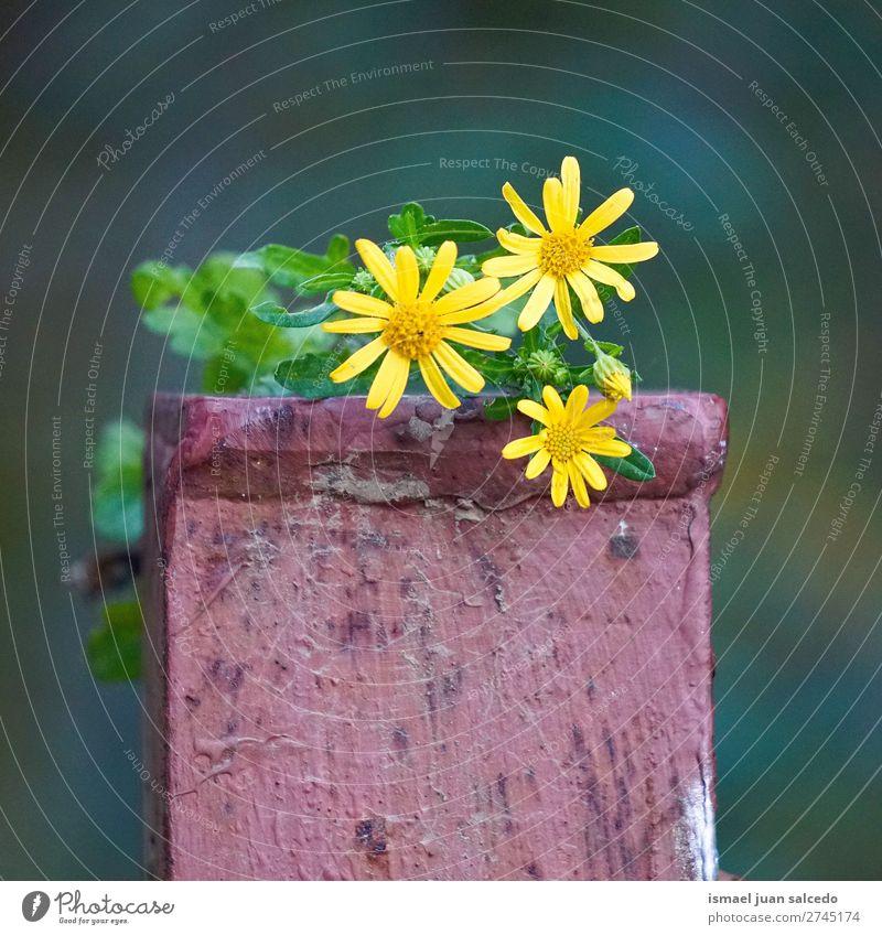Natur Sommer Pflanze Blume Winter Herbst gelb Garten Dekoration & Verzierung Beautyfotografie Blütenblatt geblümt