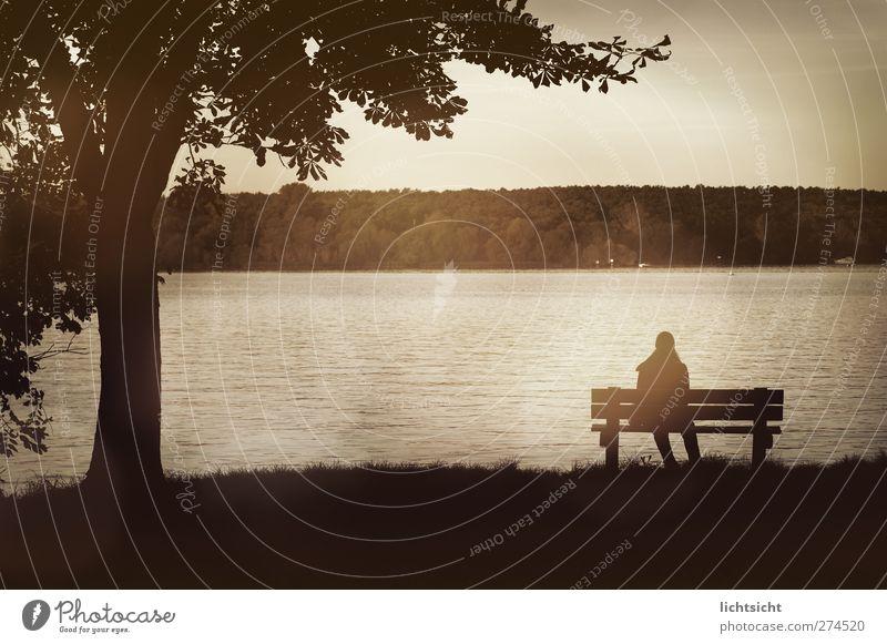 am See Mensch Frau Natur Wasser Baum Einsamkeit Erwachsene Landschaft feminin Herbst Berlin Traurigkeit See braun Wellen sitzen