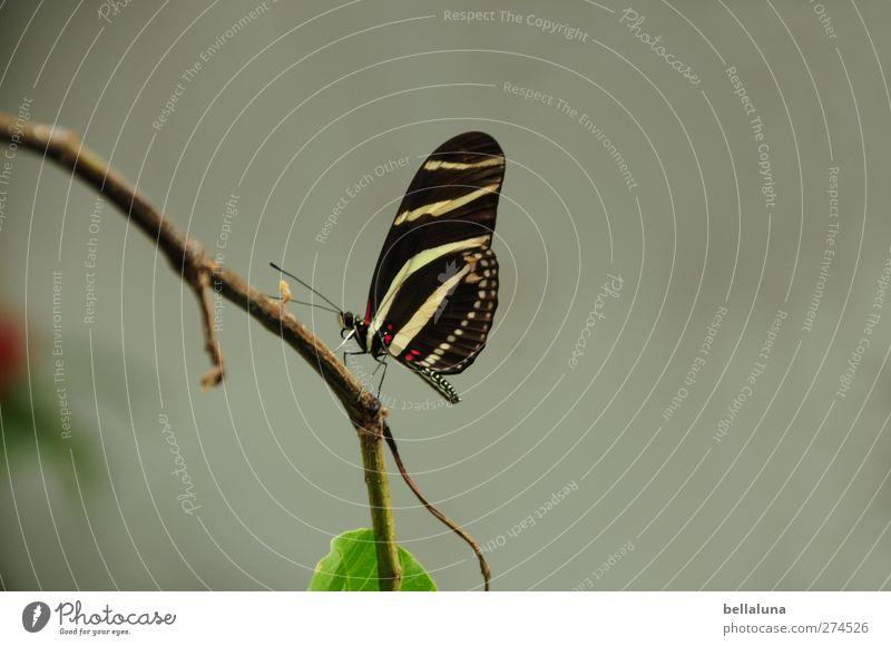 Zwischenstop weiß grün schön Pflanze Tier Blatt schwarz braun Wildtier außergewöhnlich natürlich sitzen elegant ästhetisch Flügel Ast