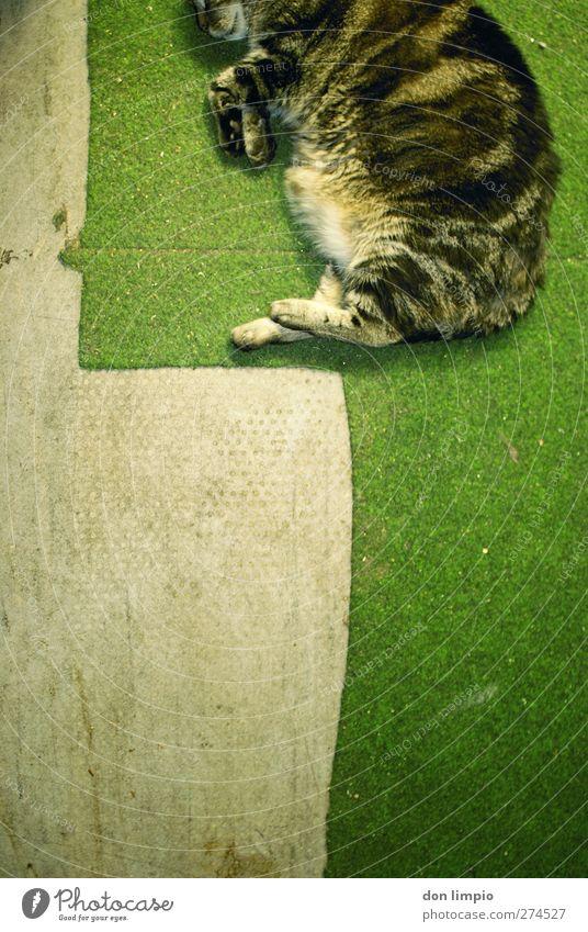 2D-katze Katze grün Tier grau springen liegen Ordnung schlafen Häusliches Leben Bodenbelag Pause einfach Fell genießen unten sportlich