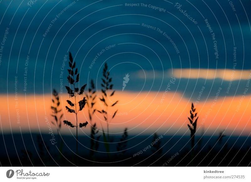 Grassilhoutte bei Sonnenuntergang Himmel Abenteuer Freiheit wandern Umwelt Natur Landschaft Pflanze Wolken Sonnenaufgang Wetter ästhetisch schön blau braun