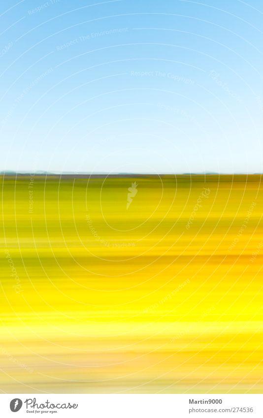 Wildflowers I Natur Ferien & Urlaub & Reisen blau grün Sommer Sonne Erholung Landschaft Blume Ferne gelb Gras Horizont Kunst Luft Feld