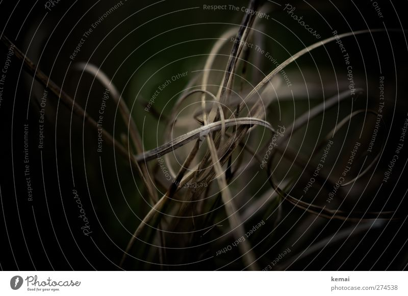 Hiddensee | Terrorgras Umwelt Natur Pflanze Frühling Grünpflanze Gras Grasbüschel Halm Wachstum dunkel trocken braun schwarz durcheinander Spirale Windung