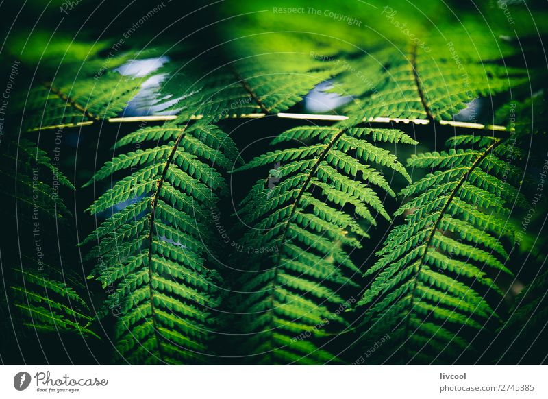 Farn im Dunkeln II Leben Natur Pflanze Urelemente Baum Wald Urwald Aktenordner dunkel nass niedlich grün schwarz Gefühle Verzweiflung Abenteuer Zufriedenheit