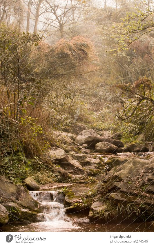 Tal der Phantasie Natur Baum Pflanze Wald Umwelt Landschaft Frühling Stimmung Kraft Nebel Fluss fantastisch Asien China Urwald Flussufer