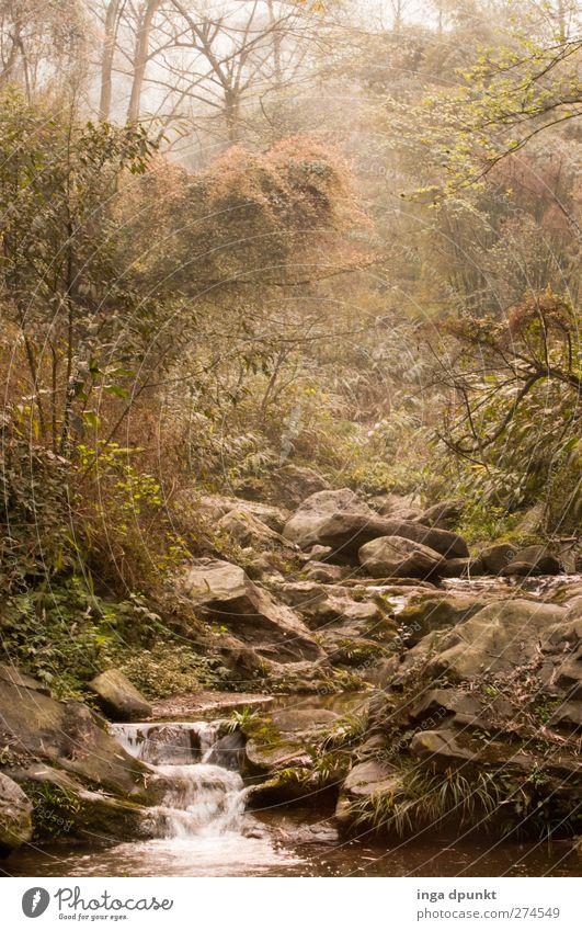 Tal der Phantasie Umwelt Natur Landschaft Frühling Nebel Pflanze Baum Wald Urwald Flussufer Bach Wasserfall Sichuan China Asien exotisch fantastisch Stimmung