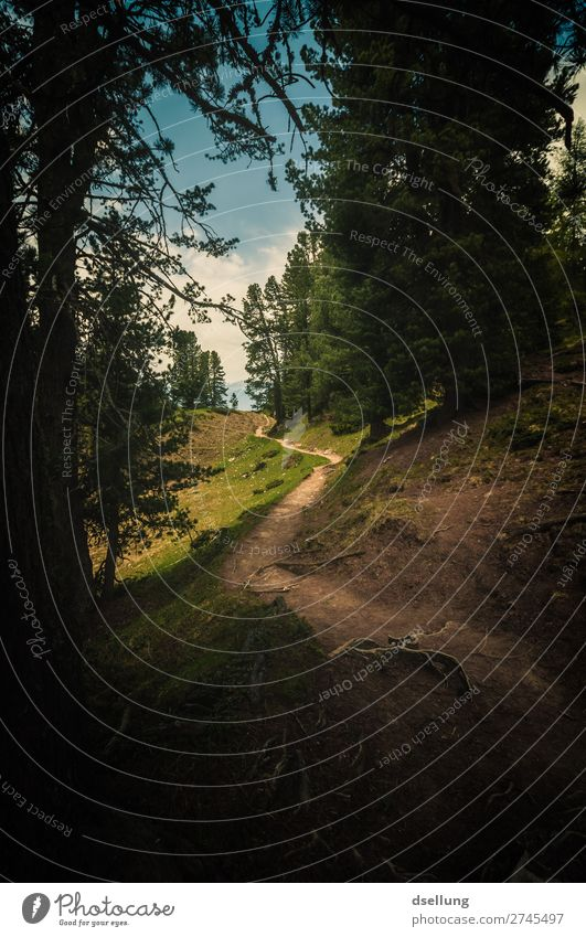 Es wird heller Ferien & Urlaub & Reisen Ausflug Abenteuer Ferne Freiheit Sommer Berge u. Gebirge wandern Natur Landschaft Schönes Wetter Wiese Wald Hügel Felsen