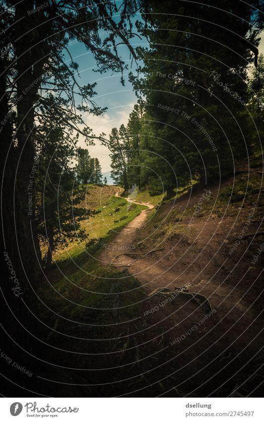 Es wird heller Ferien & Urlaub & Reisen Natur Sommer blau grün Landschaft ruhig Wald Ferne Berge u. Gebirge dunkel natürlich Wege & Pfade Wiese Bewegung