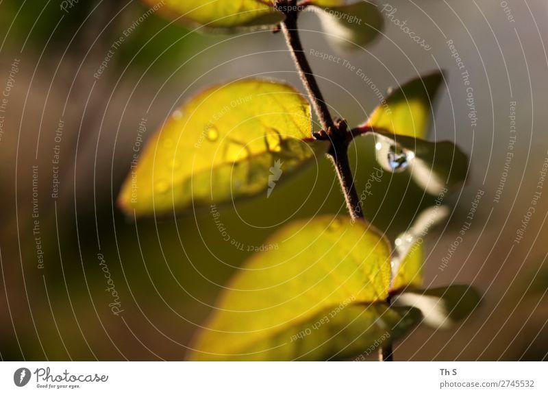 Blatt Natur Pflanze Herbst Winter Regen ästhetisch authentisch einfach elegant frisch nass natürlich braun grün Gelassenheit geduldig ruhig einzigartig Tropfen