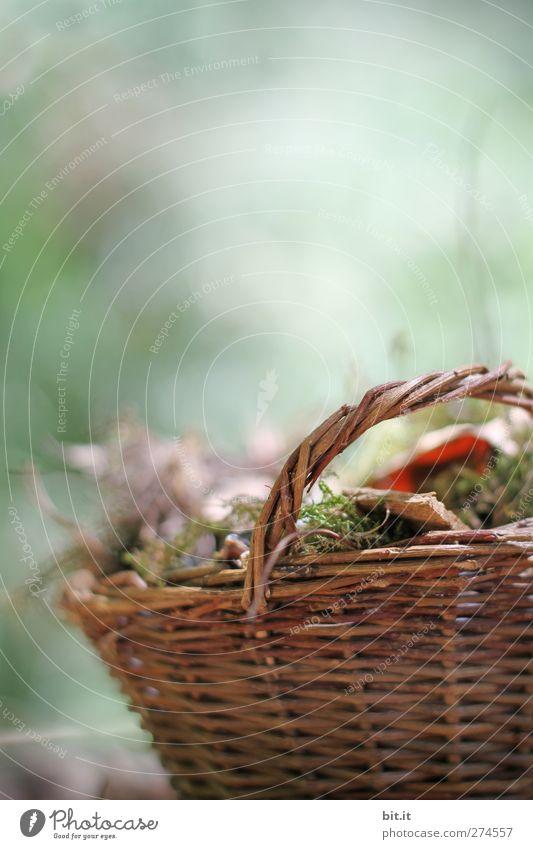 Ein Korb für den Herbst... Natur alt grün Pflanze Blatt ruhig Umwelt Herbst Garten träumen Park braun Stimmung stehen Dekoration & Verzierung Vergänglichkeit