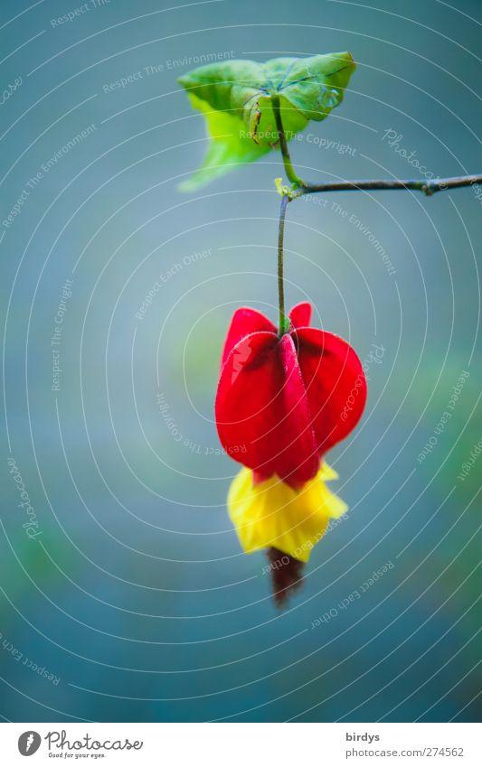 Blätterdach Natur blau grün schön Sommer Pflanze rot Blatt gelb Frühling Blüte ästhetisch leuchten Ast Blühend Duft