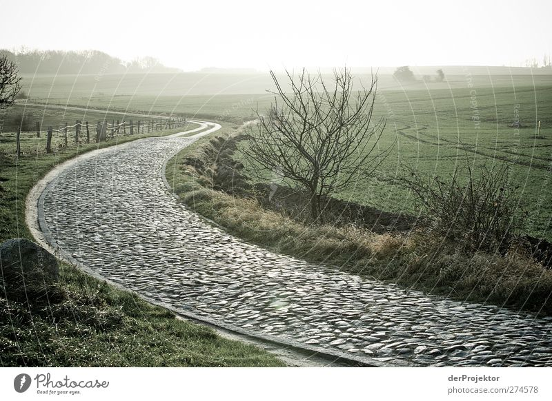 Kopfsteinpflasterweg auf Rügen Baum Tier Landschaft Straße Tod Gefühle Wege & Pfade Traurigkeit authentisch Trauer Neugier Ostsee Verkehrswege Müdigkeit Sorge