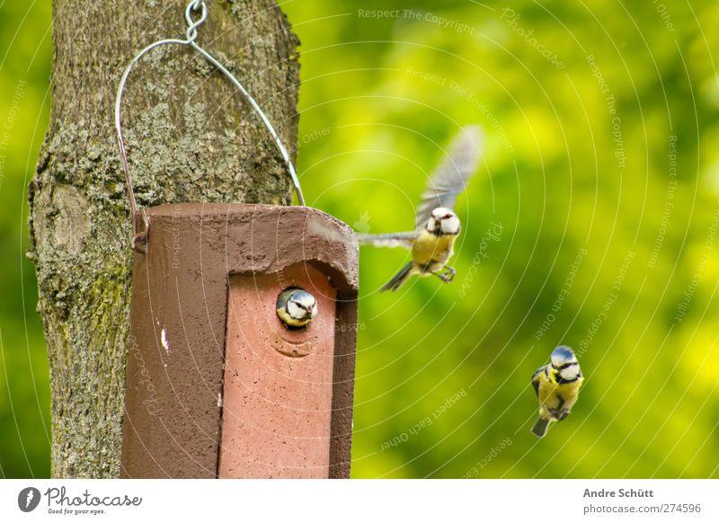 Flugschau II Natur Baum Tier Umwelt Liebe Glück Vogel Zufriedenheit fliegen Tierpaar Fröhlichkeit Häusliches Leben niedlich fliegend fleißig Nest