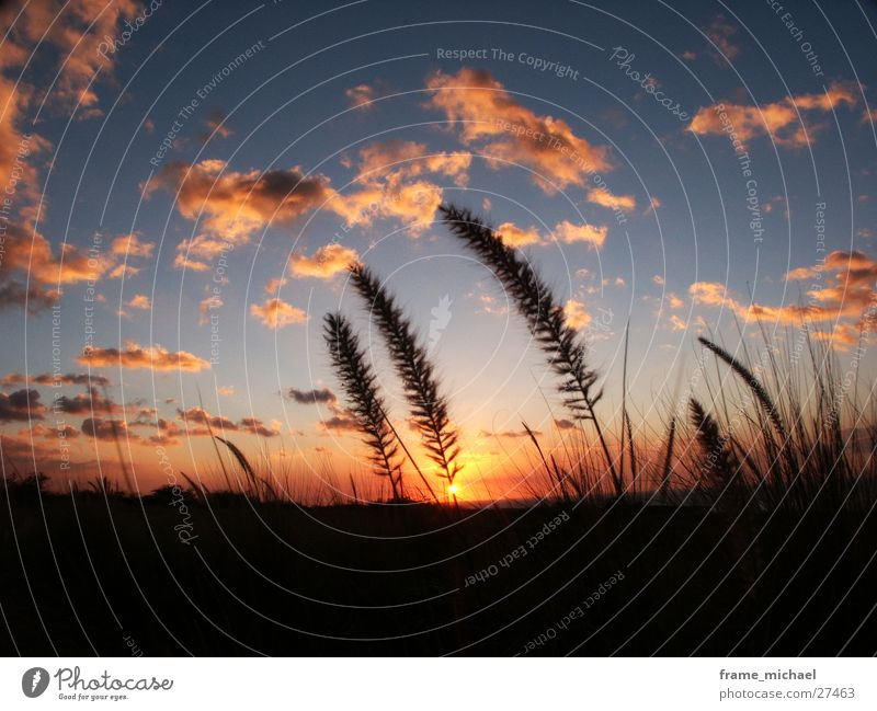 Abendsonne Sonnenuntergang Feld Hawaii Physik Wolken Abenddämmerung Wärme
