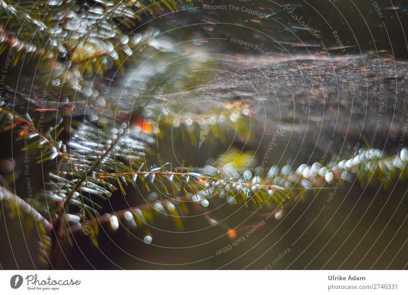 Natur - Lichtspiel im Wald Design Wellness harmonisch Erholung ruhig Dekoration & Verzierung Pflanze Wassertropfen Herbst Winter Regen Baum Tannenzweig