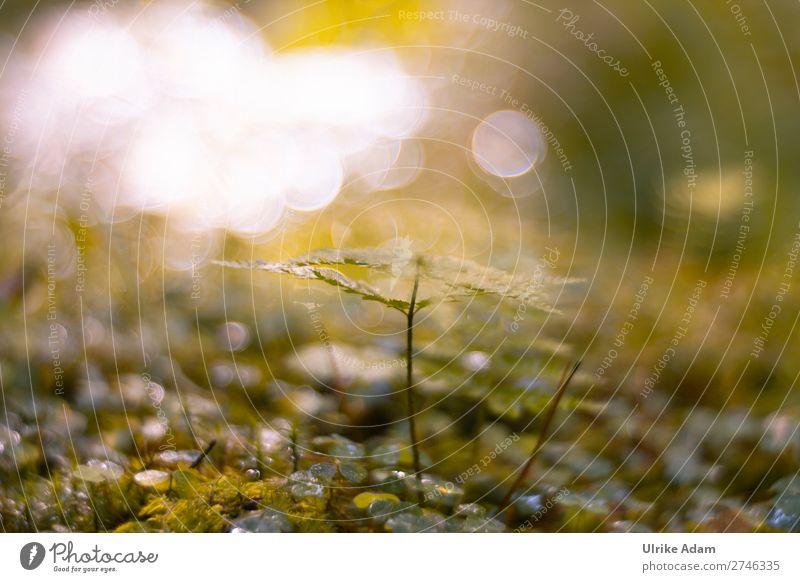 Natur - Lichtspiel im Wald Wellness Leben harmonisch Wohlgefühl Zufriedenheit Sinnesorgane Erholung ruhig Meditation Spa Dekoration & Verzierung Tapete Umwelt