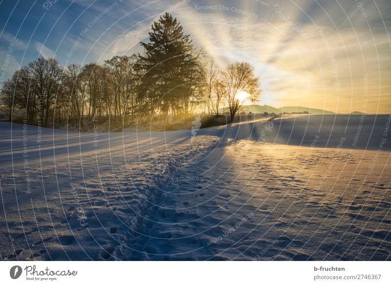 Winterlandschaft mit Sonnenaufgang Natur schön Baum Erholung ruhig Wald Religion & Glaube Schnee Glück gehen frei frisch Idylle Schönes Wetter beobachten