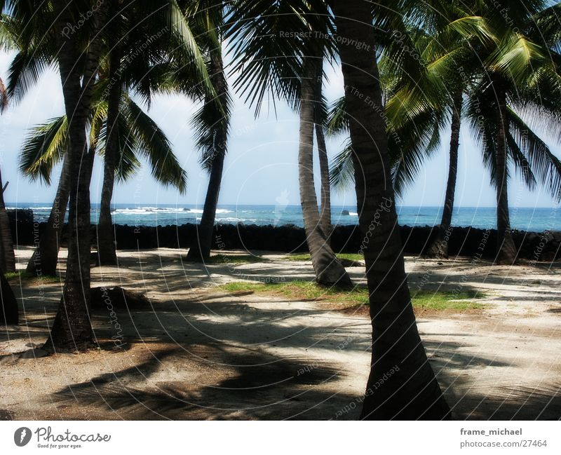 strand Strand Palme Meer Karibisches Meer Hawaii