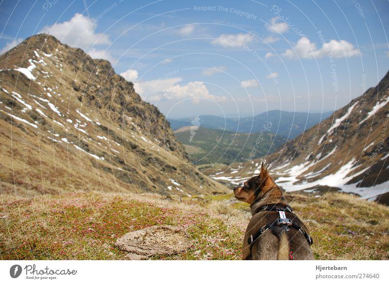 Aussicht Hund Himmel Natur Ferien & Urlaub & Reisen Sommer Tier Erholung Umwelt Ferne Landschaft Berge u. Gebirge Leben Frühling Luft Erde Zufriedenheit