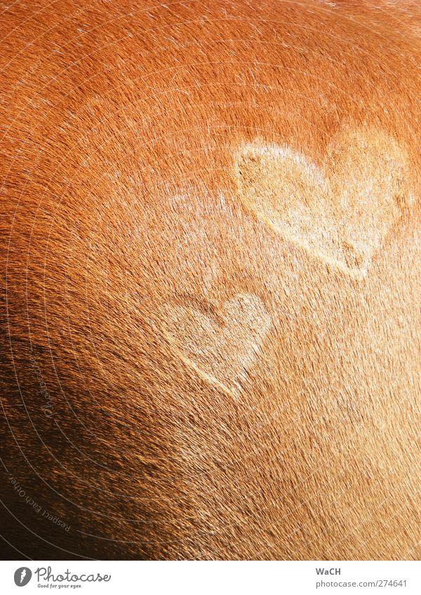 Ich lieb' mein Pferd 1 Tier Zeichen außergewöhnlich Glück braun Gefühle Liebe Tierliebe Verliebtheit Treue Romantik schön Farbfoto Textfreiraum links