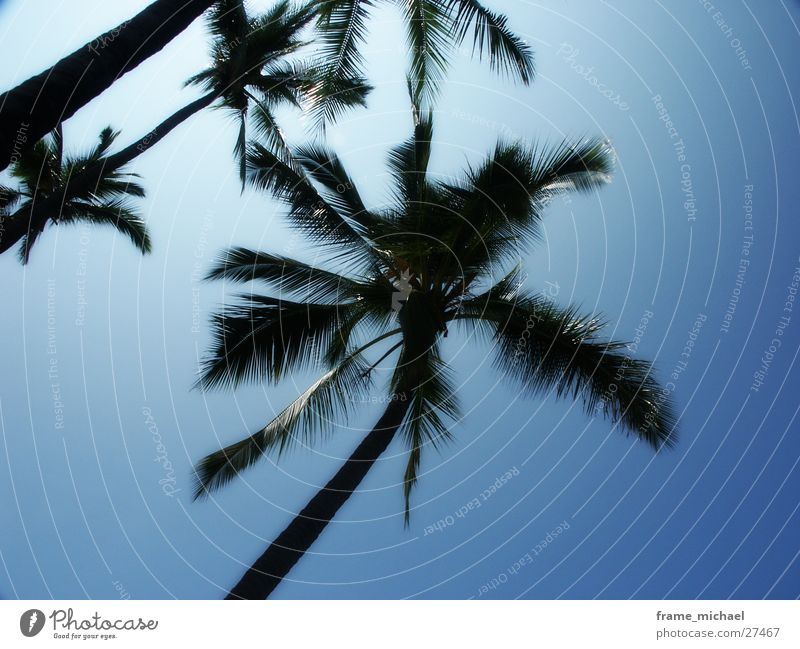 palms Sonne Palme Karibisches Meer Hawaii Mittag