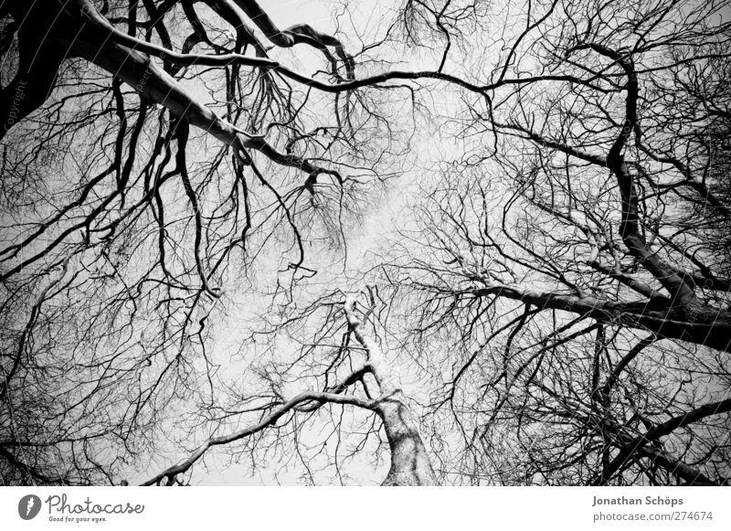 Bäume Umwelt Natur Himmel Wolkenloser Himmel Herbst Winter Schönes Wetter Baum ästhetisch Perspektive aufwärts steil Verzerrung Wald Park kahl Baumkrone Ast