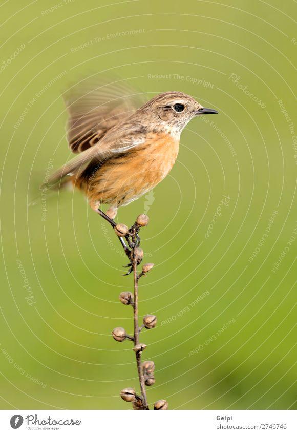 Wunderschöner Wildvogel auf einem Ast thront Leben Frau Erwachsene Umwelt Natur Tier Vogel klein natürlich wild braun weiß Tierwelt allgemein gehockt