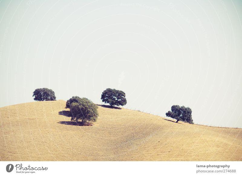 cinco amigos [LIII] Landwirtschaft Forstwirtschaft Natur Landschaft Sommer Pflanze Baum Feld Hügel Sierra de Grazalema Andalusien Spanien 5 mediterran Steppe
