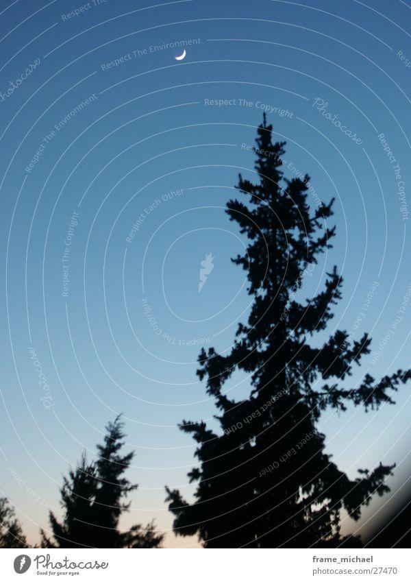 Abendhimmel Sonnenuntergang Verlauf Baum Mond