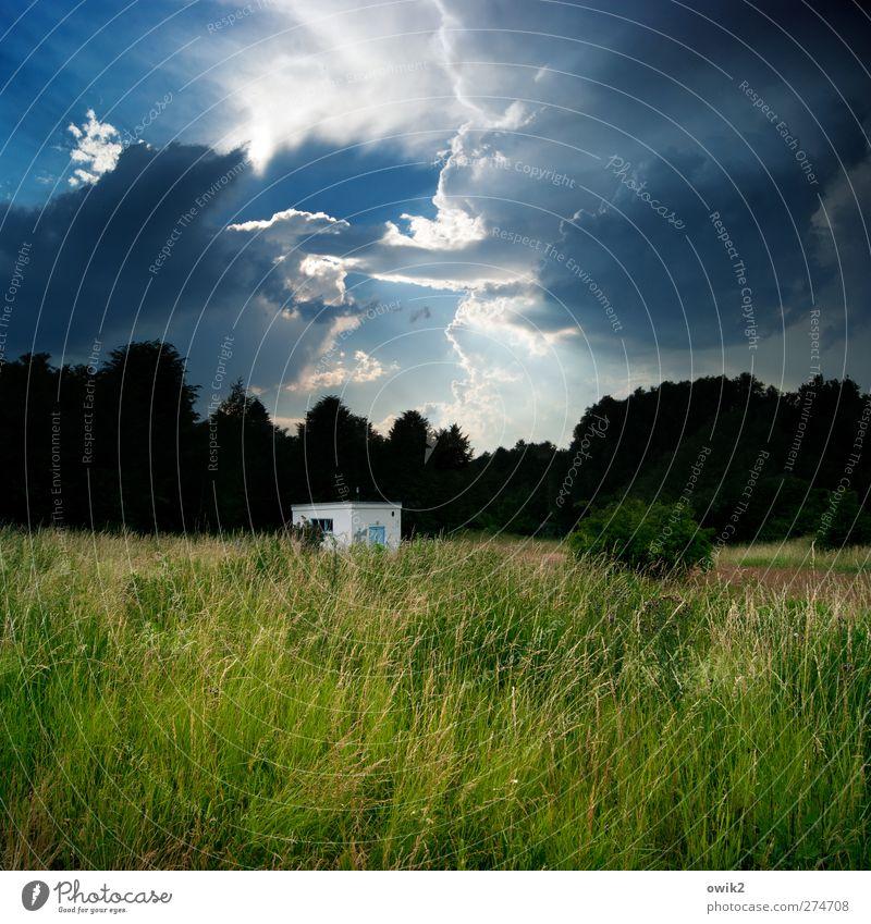 Tiefes Gewölk Himmel Natur blau grün Baum Pflanze Wald Umwelt Landschaft dunkel Wiese Gras Luft Horizont Wetter groß