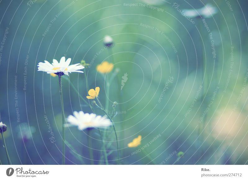 Leise. Natur schön Sommer Pflanze Blume Umwelt Wiese Frühling Blüte Stimmung Zufriedenheit natürlich glänzend frei Wachstum ästhetisch