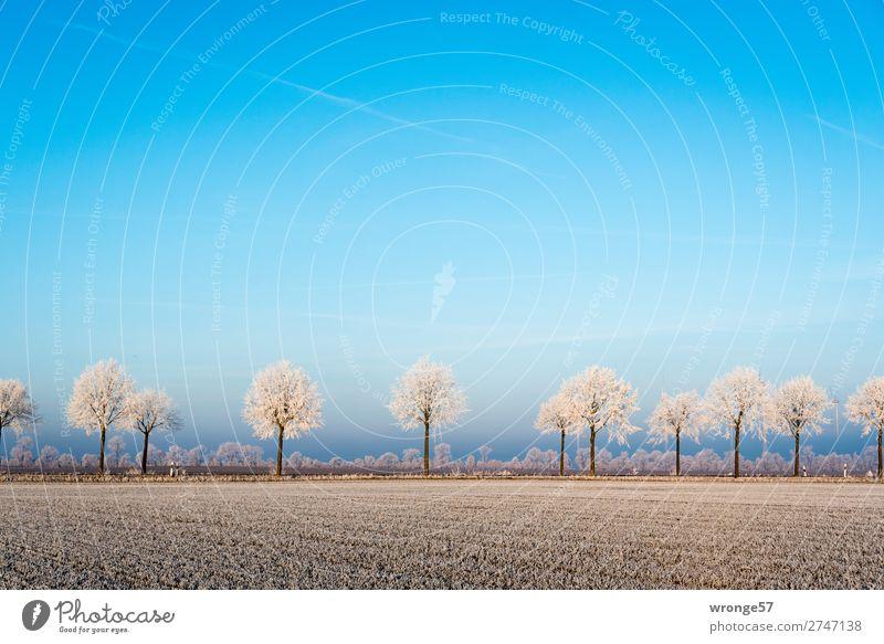 Winterlandschaft mit Raureif Umwelt Natur Landschaft Pflanze Horizont Schönes Wetter Eis Frost Baum Feld Börde Straße kalt blau braun weiß Querformat