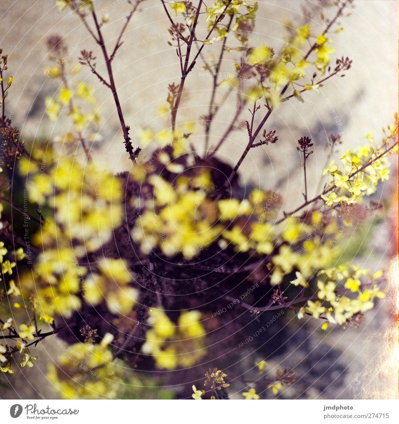 Ich weiß nicht was hier blüht Natur Sommer Pflanze Blume Blatt Umwelt Frühling Blüte Park Wachstum Blühend analog Duft Blütenknospen Blütenblatt verblüht