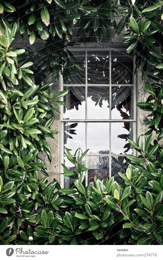eingerahmt Haus Einfamilienhaus Traumhaus Bauwerk Gebäude Architektur Mauer Wand Fassade Fenster alt ästhetisch historisch retro grün Reichtum Häusliches Leben
