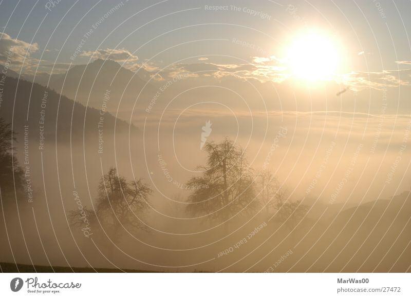 Rheintal im Nebel Sonnenuntergang Herbst Wolken schemenhaft Baum Berge u. Gebirge