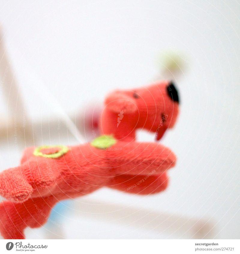 heute gibts fliegende frottée-hunde! Hund weiß schön rot Tier Spielen Gefühle hell Raum Wohnung Kindheit fliegen frei Dekoration & Verzierung Häusliches Leben Kindheitserinnerung