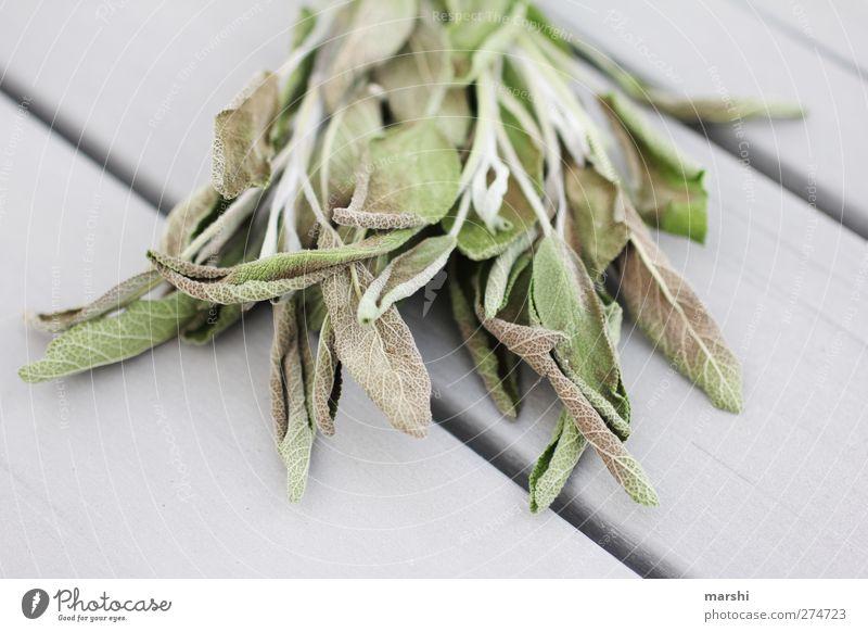 heilende Kraft Natur grün Pflanze Blatt grau Gesundheit Gesundheitswesen Sträucher Kräuter & Gewürze vertrocknet Heilung aromatisch Salbei